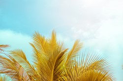 palm tree and sun